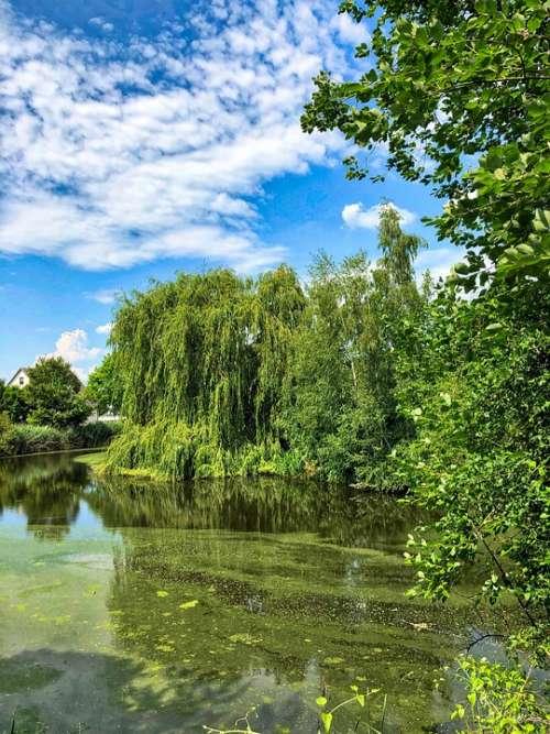 Pond River Landscape Waters Ducks Summer Nature