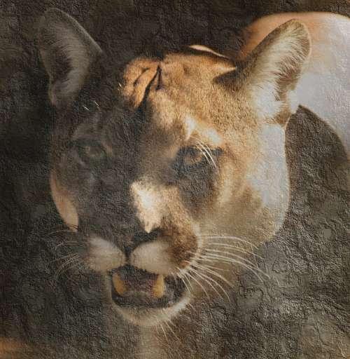 Predator Wilderness Nature Wild Animal Carnivores