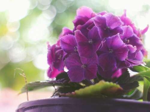 Purple Flower Nature Flores Flora Flor Plant