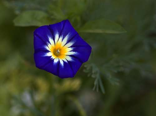 Purple Flower Mov Plant Nature Supplies Flora