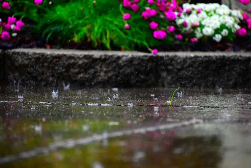 Rain Flowers Vibrant Drops Falling Nature Garden