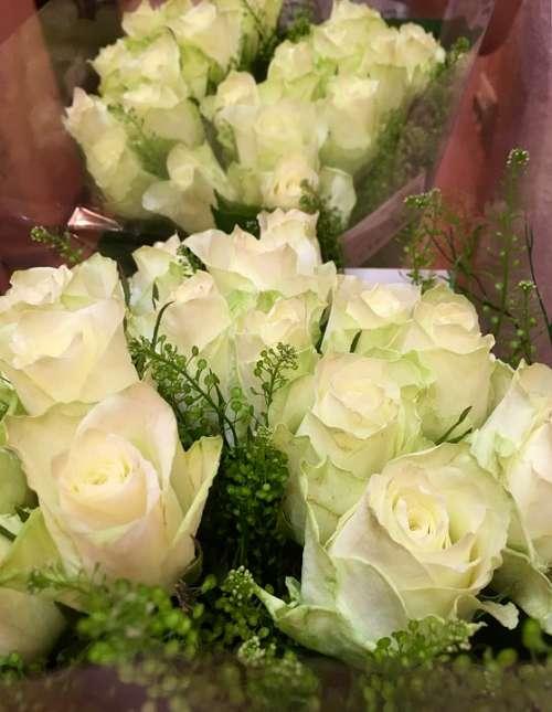 Rose White Gift Flowers Beautiful Love