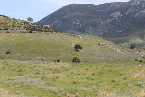 Sardinia Nature Landscape Trip Sky Green