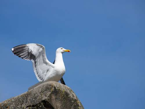 Seagull Bird Animal Animal World Nature Wing