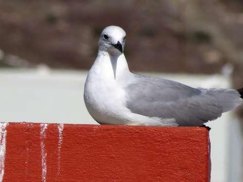 Seagull Bird Ocean Sea Beach Gull Animal Feather