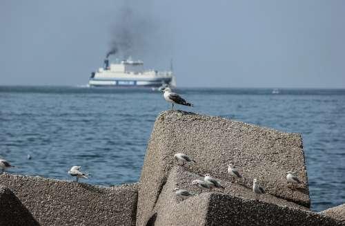 Seagulls Sea Riva Stop