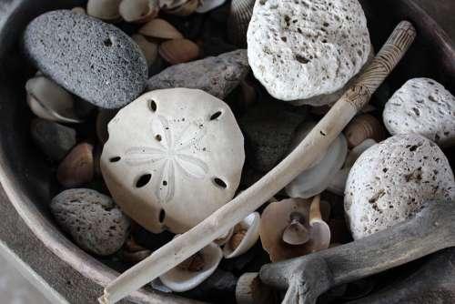 Seashell Shells Silver Dollar Beach