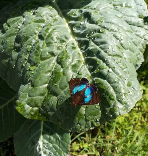 Sheet Butterfly Green Blue Nature Leaf Plant