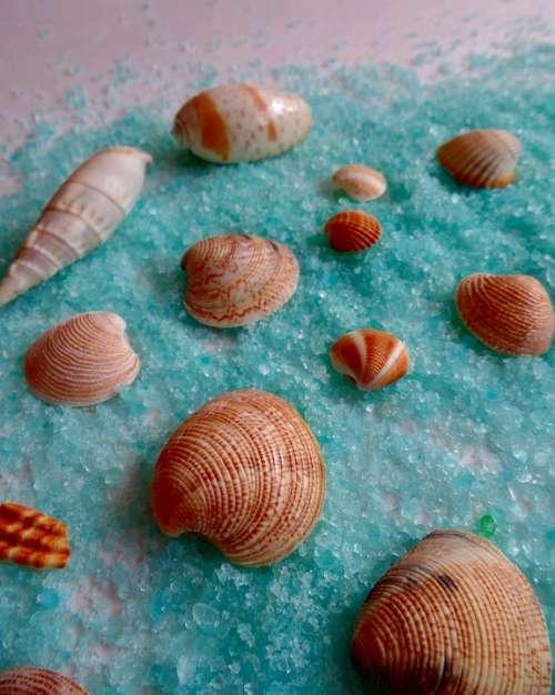 Shell Sea Beach Ocean Vacations Sand Summer