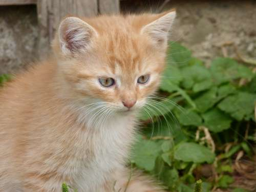 Small Kitten Cat Nice Home Animal