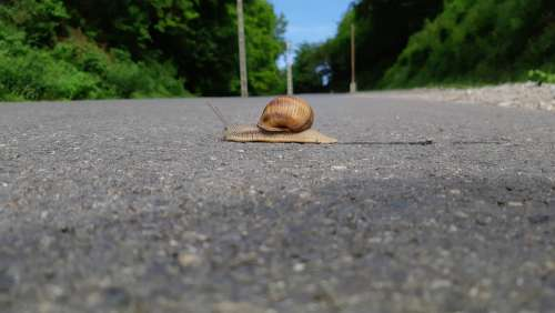 Snail Road Brave Rush Slow