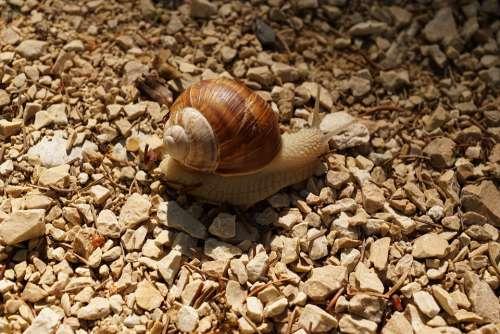 Snail Crawl Mollusk Slowly Nature Animal Road