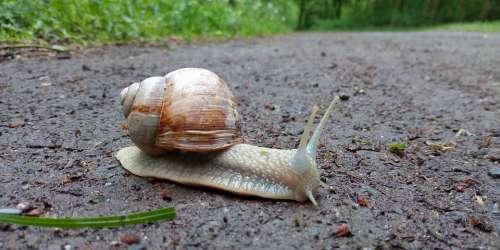 Snail Giant Snail Big Snail Garden