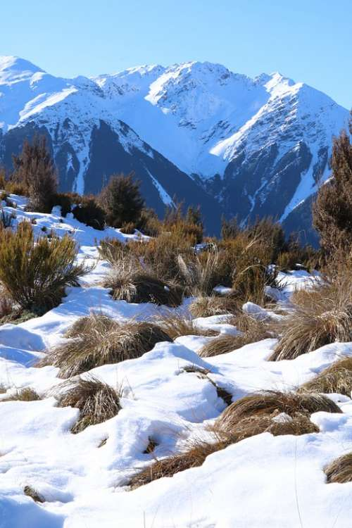 Snow Mountains Winter Tussocks Grasses Nature
