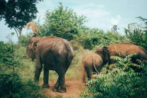 Sri Lanka Tangalle Asia South Asia Udawalawe