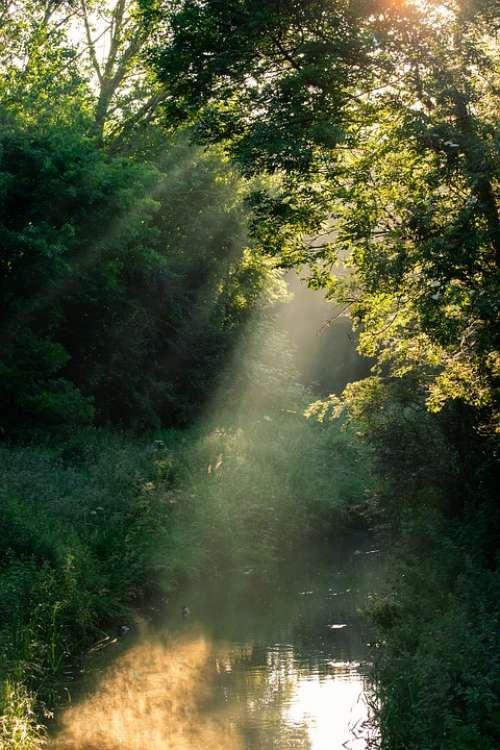Sunrays Through Trees Sun Rays Light Rays Stream