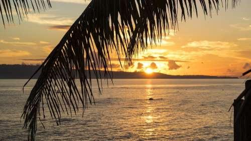 Sunset Sunrise Orange Tree Coconut Tree