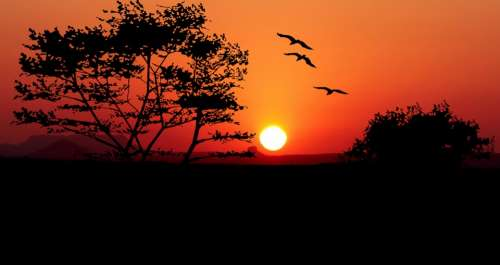 Sunset Trees Nature Birds Landscape Tree Evening