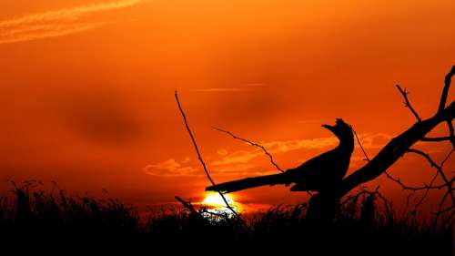 Sunset Bird Branch Horizon Sky Nature Landscape