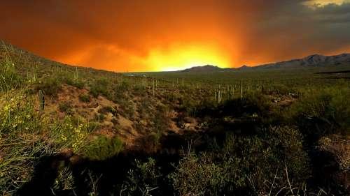 Sunset Nature Park Landscape Cactus Saguaro