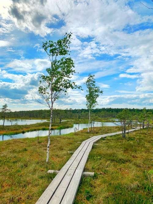 Swamp Birch Pond Raised Bog Latvia Nature