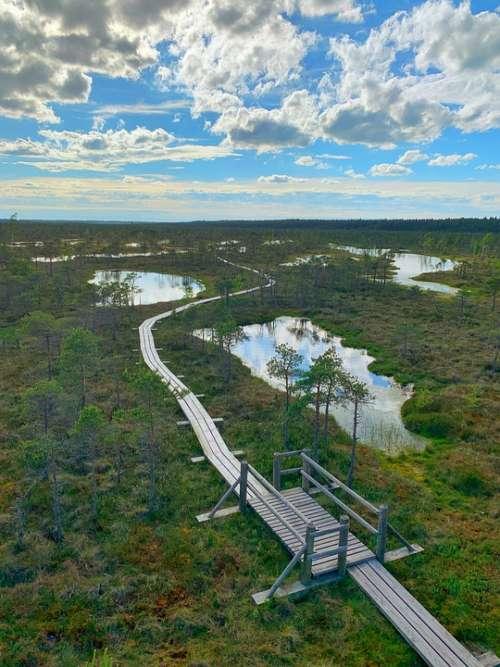 Swamp Pond Raised Bog Latvia Nature