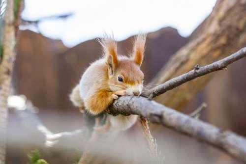 The Squirrel Animal Cute Nature Hairy Garden Wild