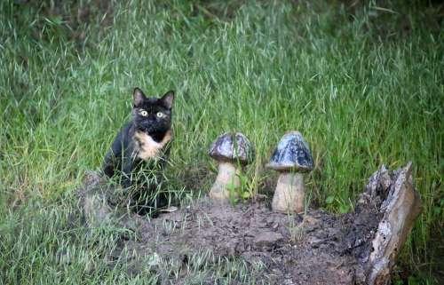 Tortoise Shell Cat Domestic Cat Pet Mushrooms Log