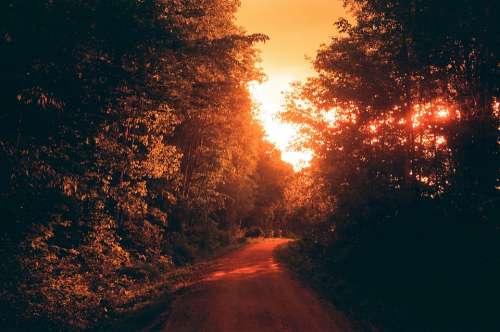 Trail Light Sun Nature Trees Wood Film Analog