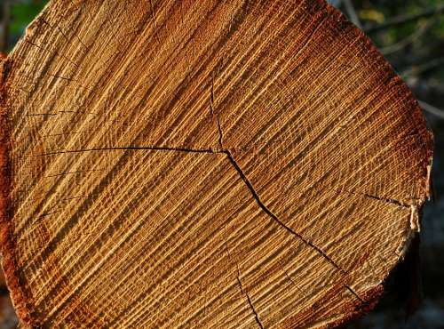 Tree Tree Ring Tree Rings Wood Nature Structure