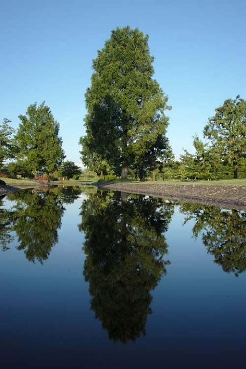 Tree Reflection Water Pond Park Nature