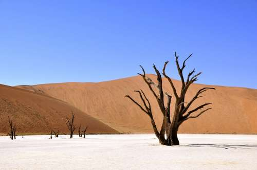 Tree Desert Namibia Clay Pan Drought Africa Dry
