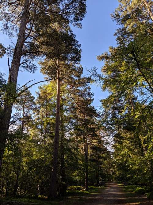 Trees Woodland Forest Blue Sky Green Nature
