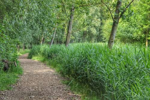 Trees Forests Forest Path Summer Nature Green