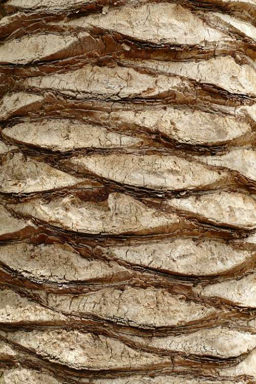 Tribe Tree Trunk Palm Tree Wood Scales Nature