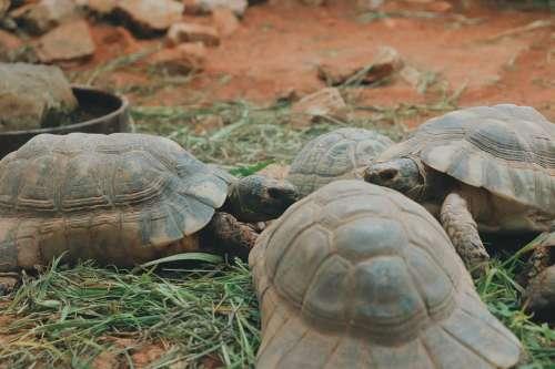 Turtles Zoo Animals Shell Heads