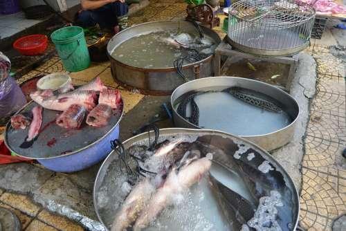 Vietnam Hanoi Fish Asia