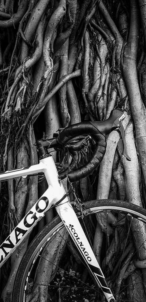 Vintage Look Tree Cycle Black And White Branch