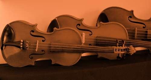 Violin Viola Brown Musical Instruments Wood