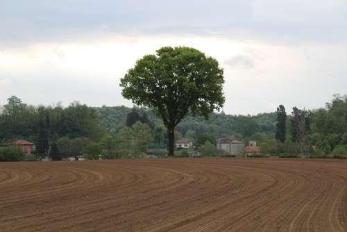 Walnut Tree Nature Green Field Grow