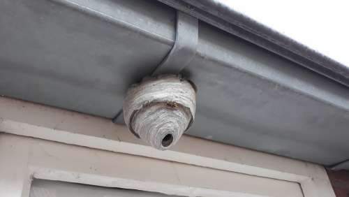 Wasp Nest There Bug Fauna Build Paper Larf