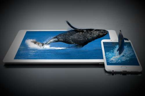 Whale Dolphin Water Mammals Sea Fish Jump Iphone