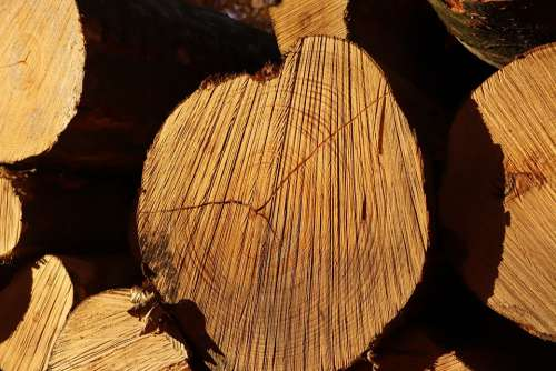 Wood Autumn Sun Annual Rings
