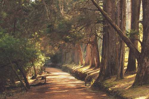 Woods Scenery Evening Forest Nature Trees Path