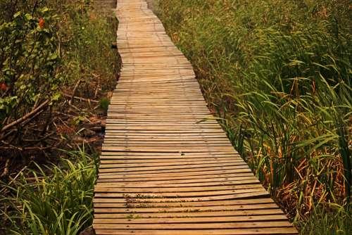 Grass Growing In Low Lying Wetland