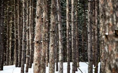 snow winter trees plants branch