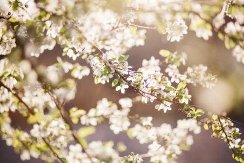 flower white petal bloom garden