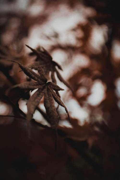 leaf plant nature blur