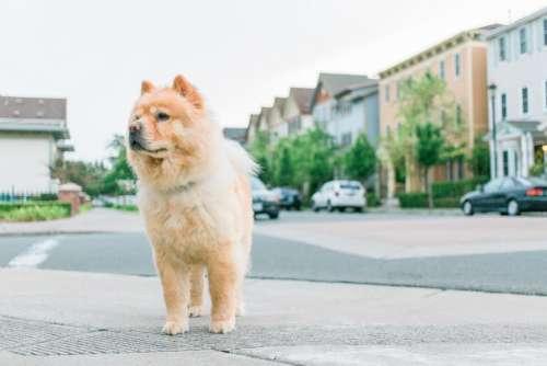 dog puppy pet animal street