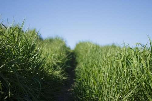 nature grasslands grass road path